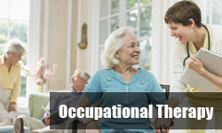 Occupational Therapy (BOT)